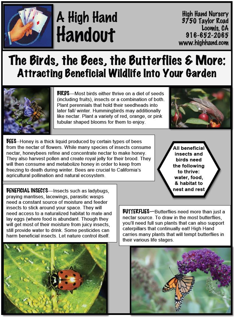 Birds-Bees pg1