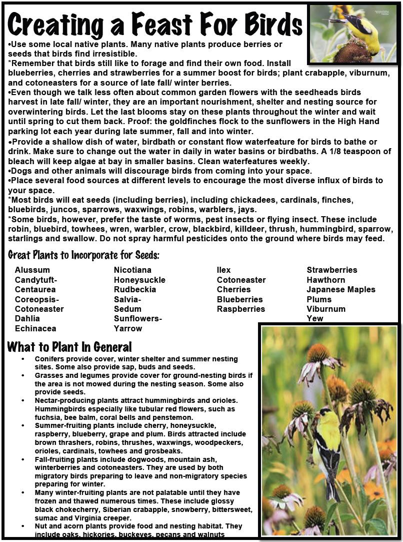 Birds-Bees pg3