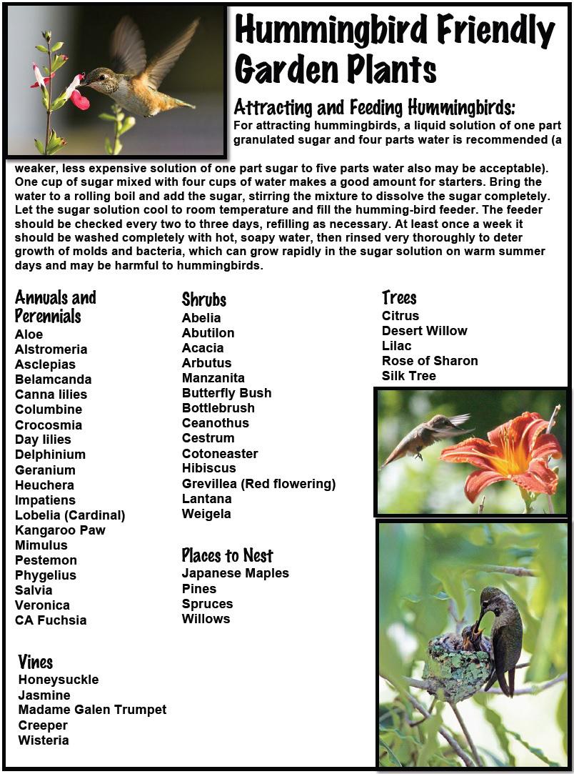 Birds-Bees pg4