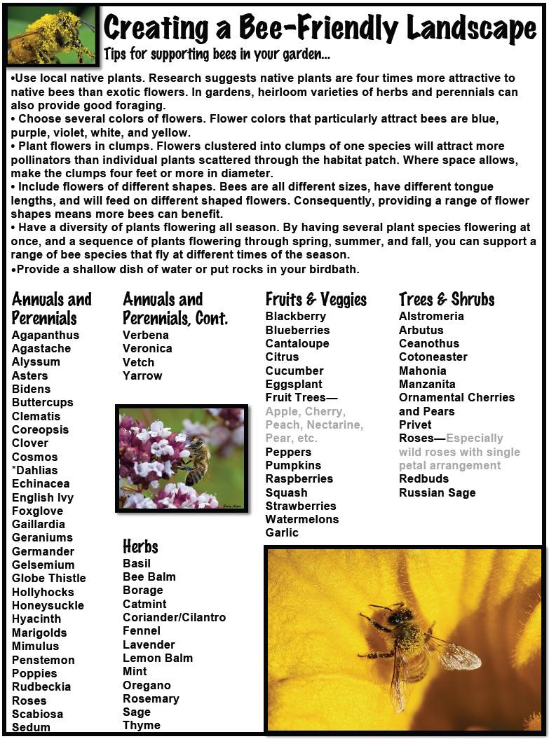 Birds-Bees pg5