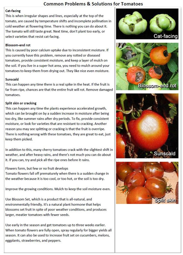 Tomato Problems pg1