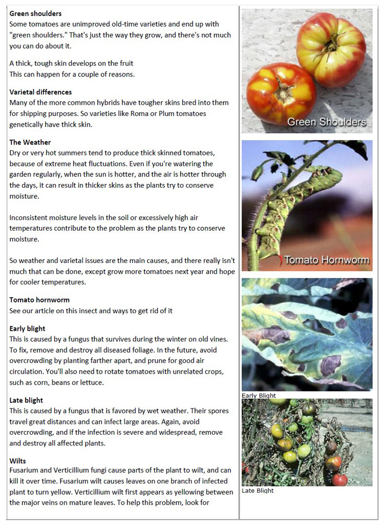 Tomato Problems pg2